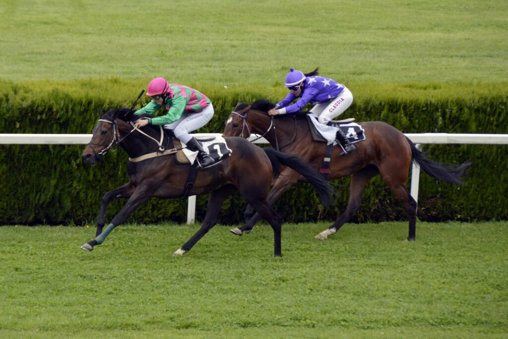 picture of horses galloping during a horse race,