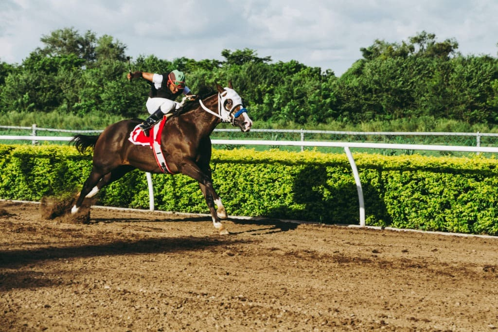 picture of a racehorse running on a track,
