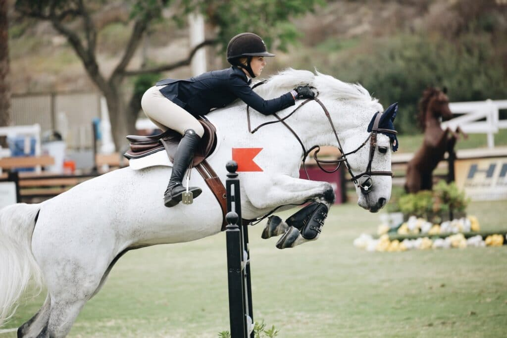 Picture of a horse showjumping, English style.