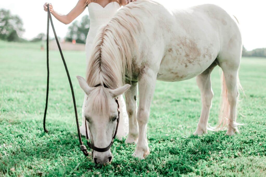 ponies,pony,eats,hay,diet,