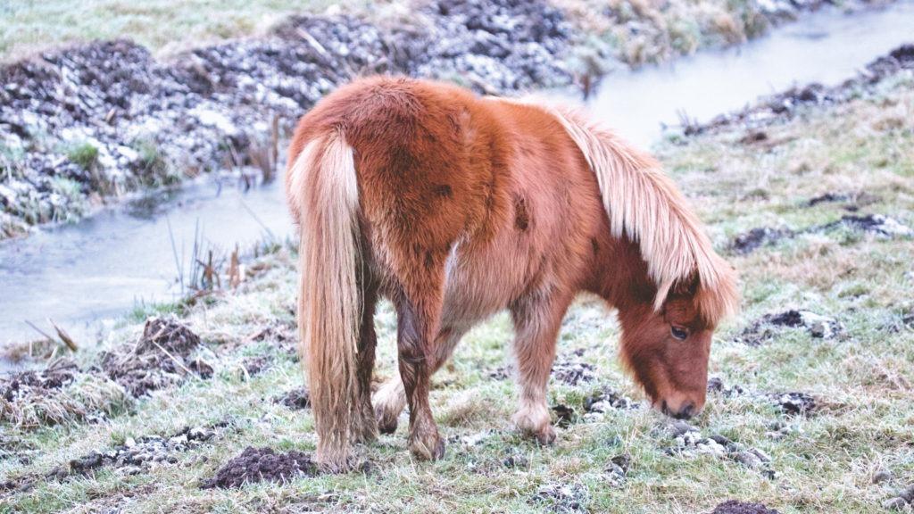 ponies eat,