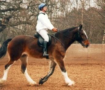 riding a Shire horse,