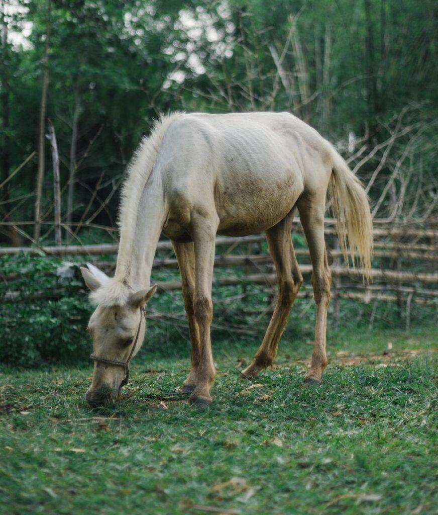 skinny, horse,thin,