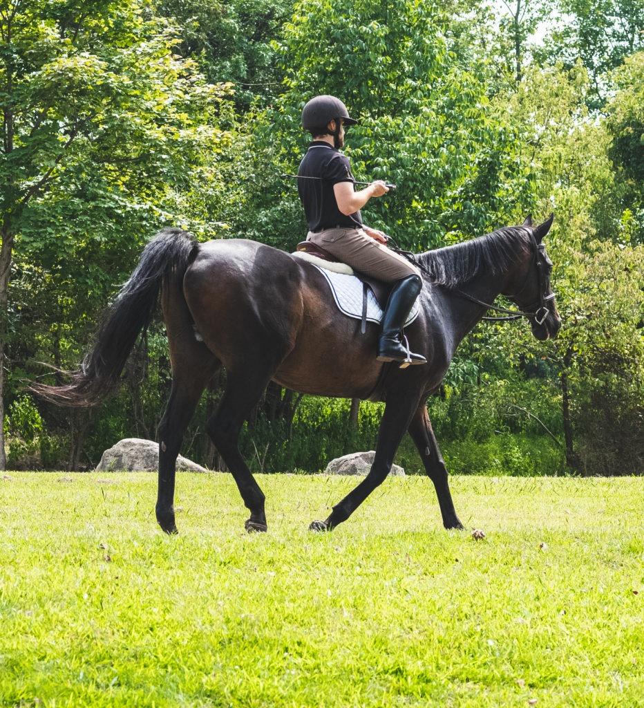 warm-up,horse,training,