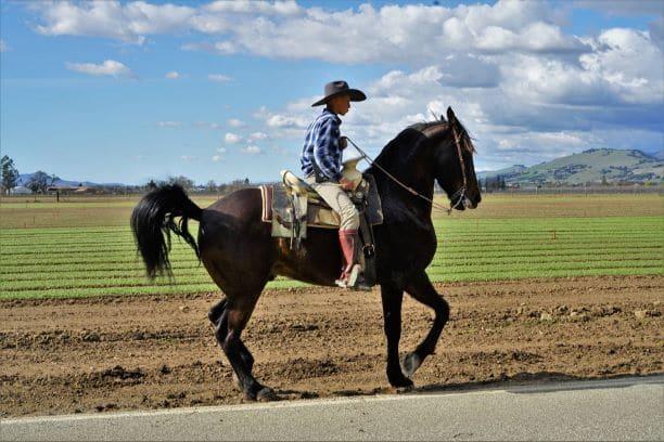barefoot horse,barefoot,horsback,riding,horse,