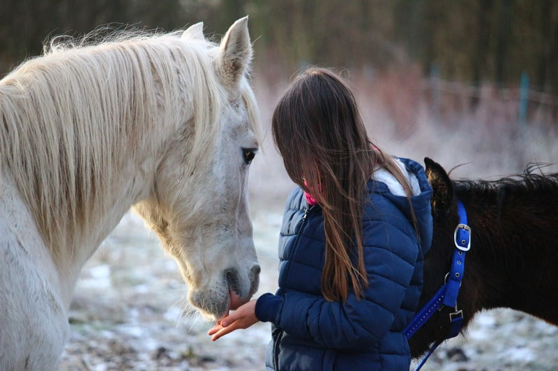 Picture of a girl feeding her horse alfalfa pellets by hand,