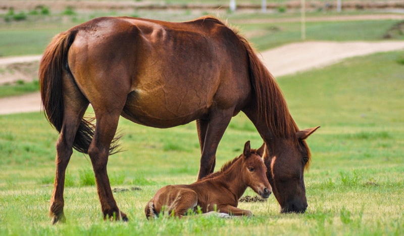 picture of a mare with signs of heaves and her foal,