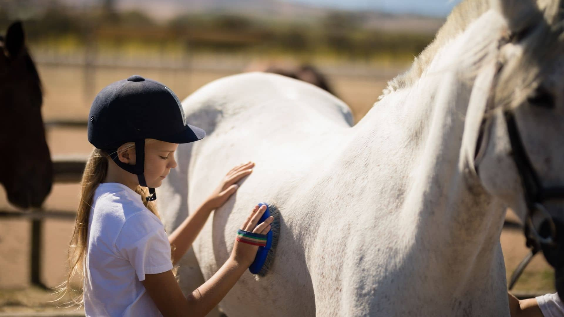 Why Brush a Horse Before and After Riding?