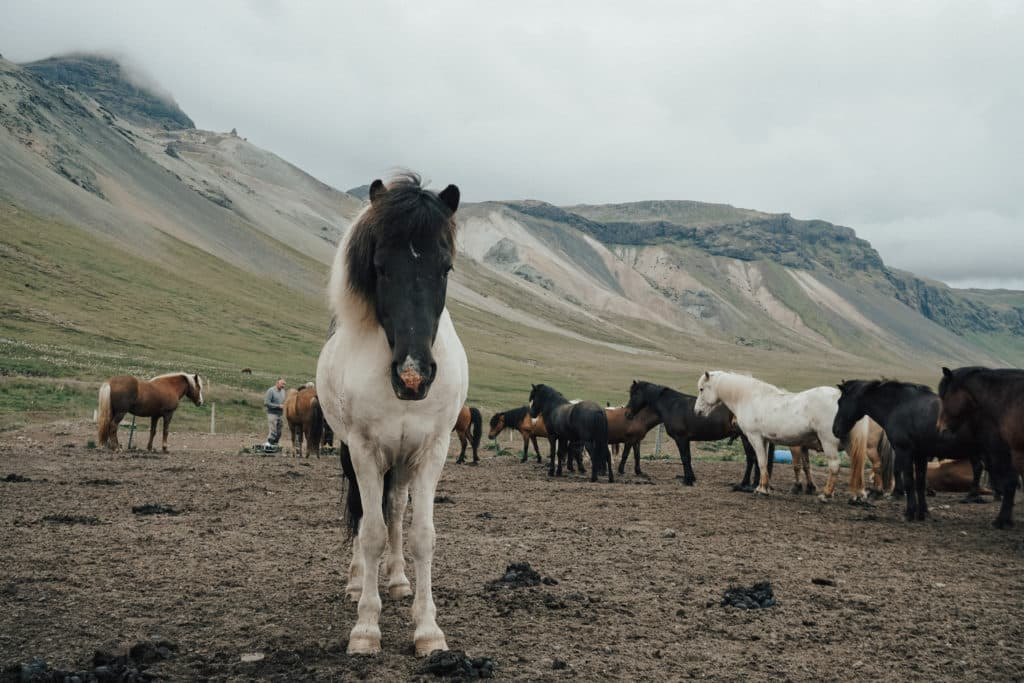 laying,horse,pasture,sleeping,
