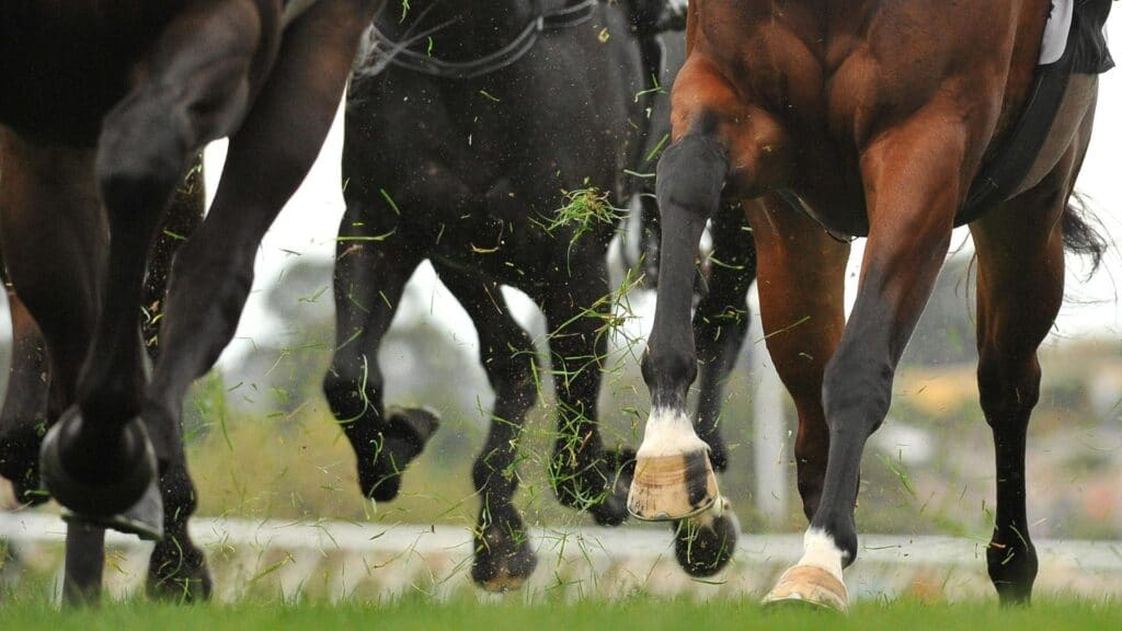 change leads,lead,leads,racehorse,horseracing,