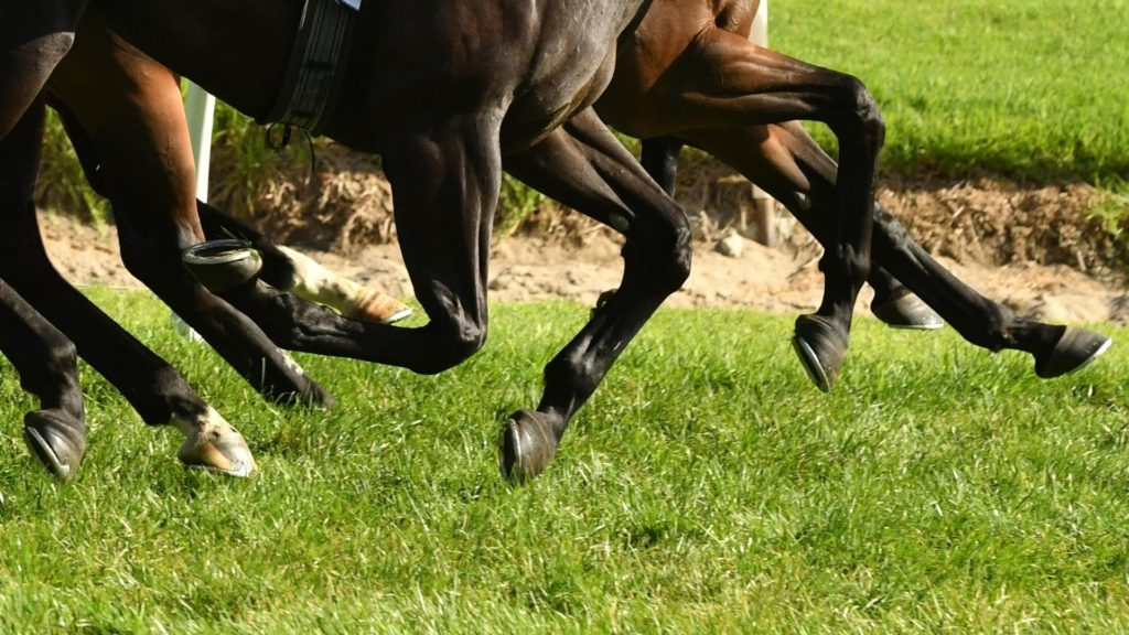 Picture of a horse legs,