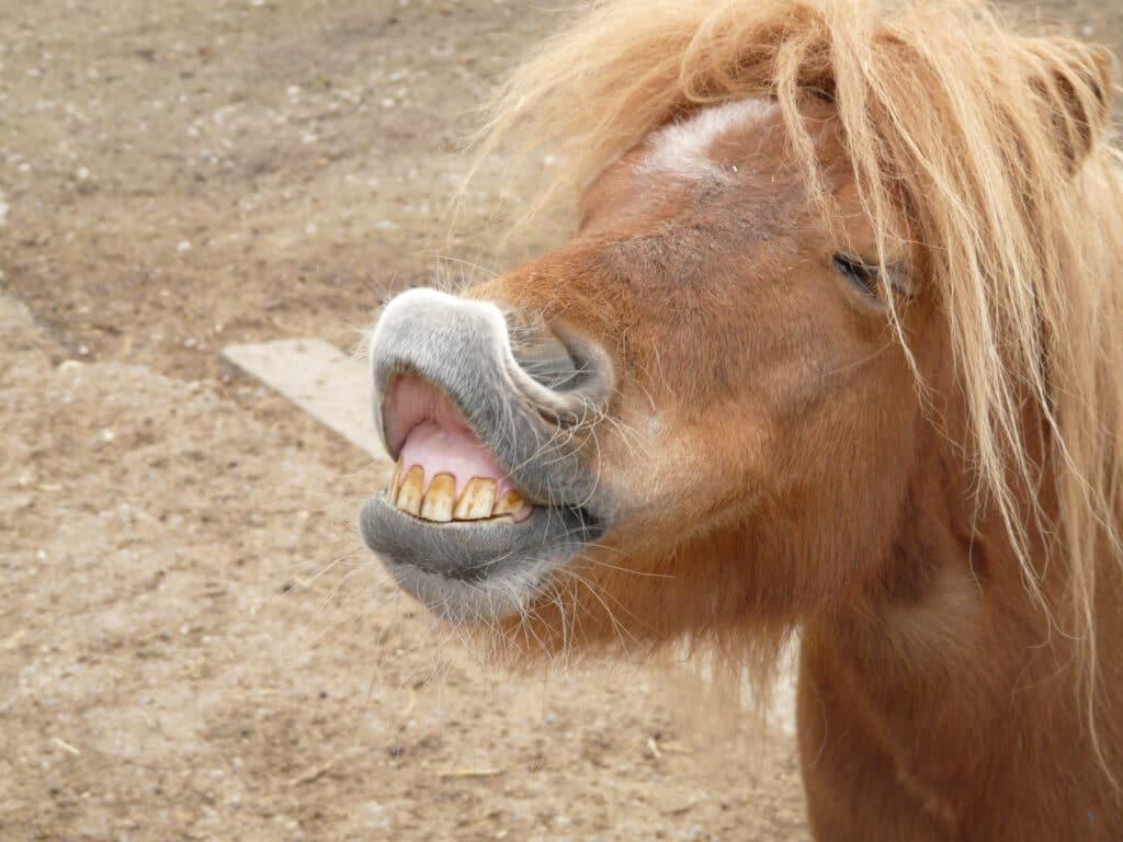 ponies,mean,