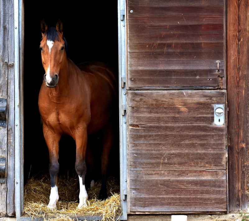 horse stall, new home,