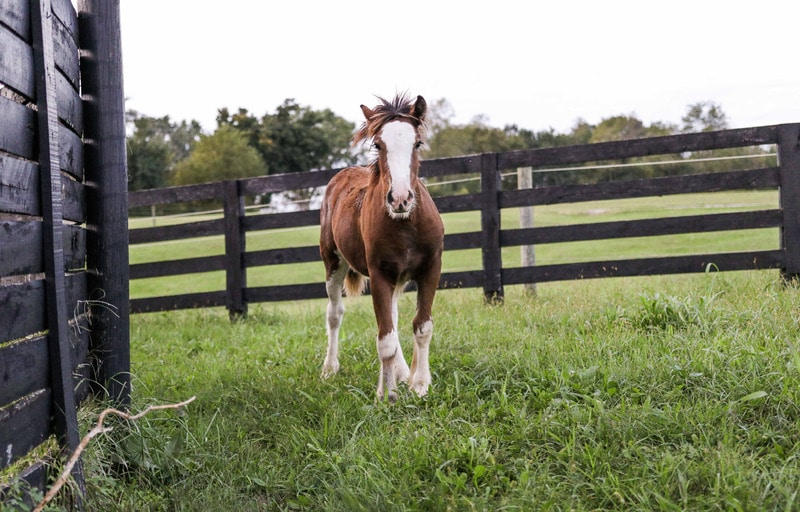 paddock,new home,horses,