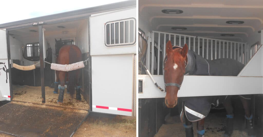 Picture of horses tied in a horse trailer,