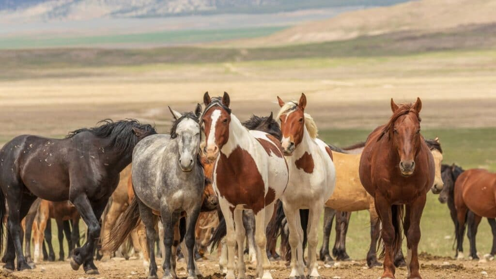 picture of horses standing, one might be sleeping.,