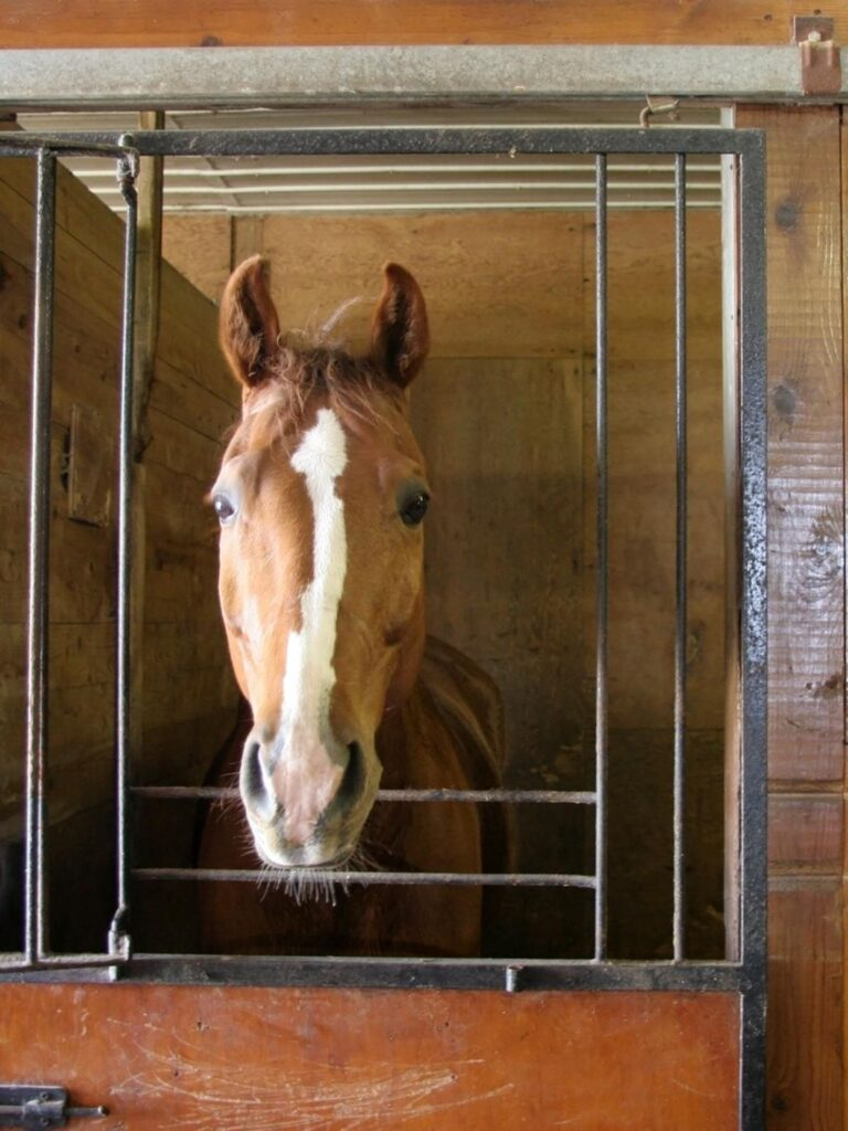 stall,barn,horse,