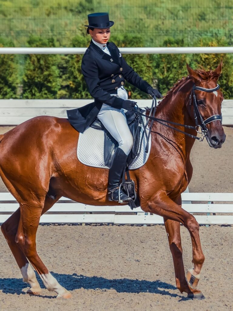 The Best Horse Breeds For Dressage And Show Jumping Top 5