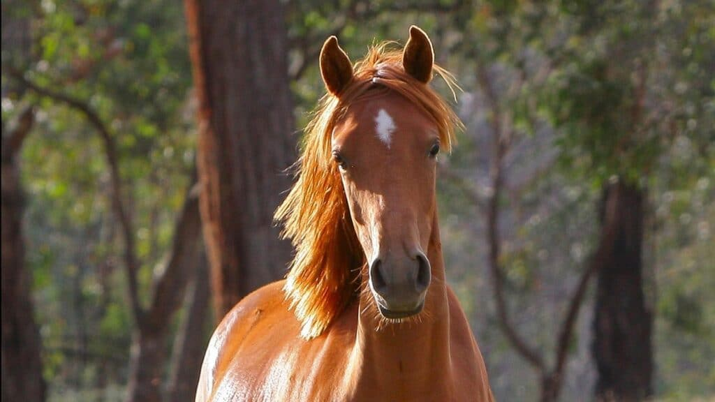 Picture of an alert horse,