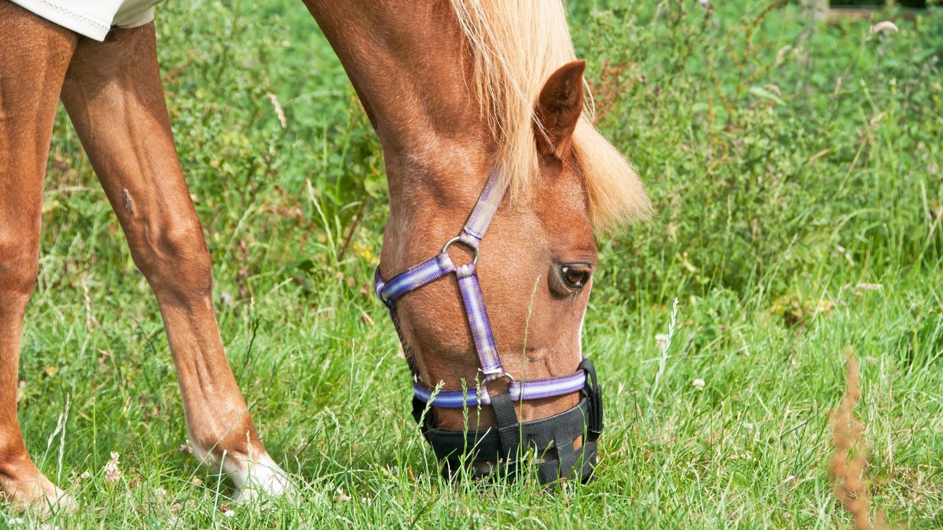 Best Grazing Muzzles for Horses