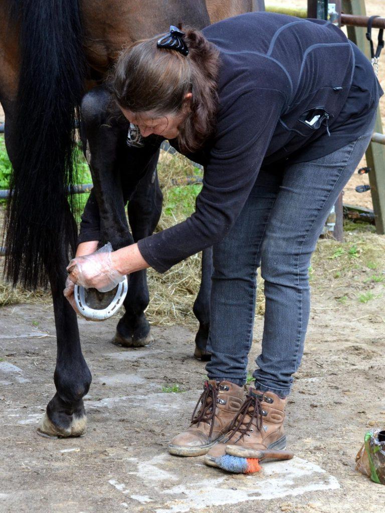 hooves,horses,hoofs,feet,care,