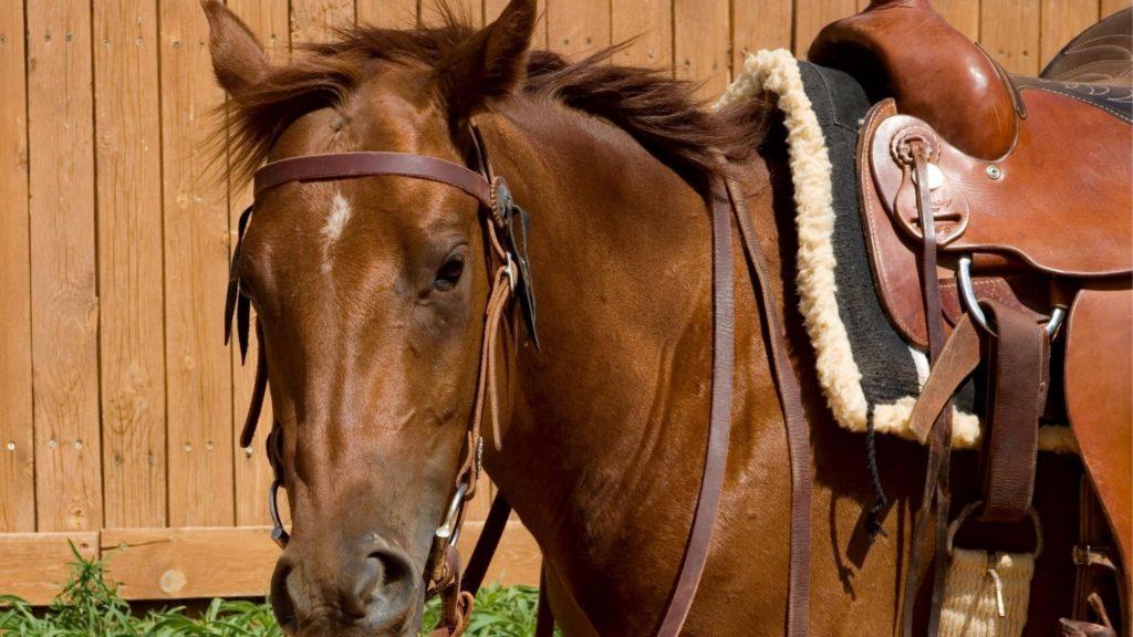 saddle pads,horse riding,saddles,pads,