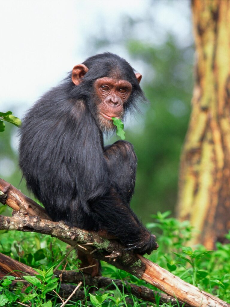 smart,monkey,horses,
