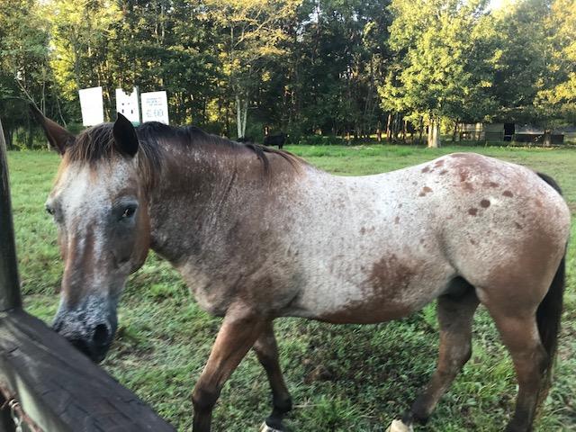 beginner horse,