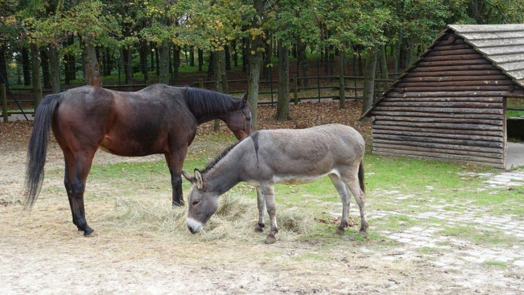 companion,donkey,
