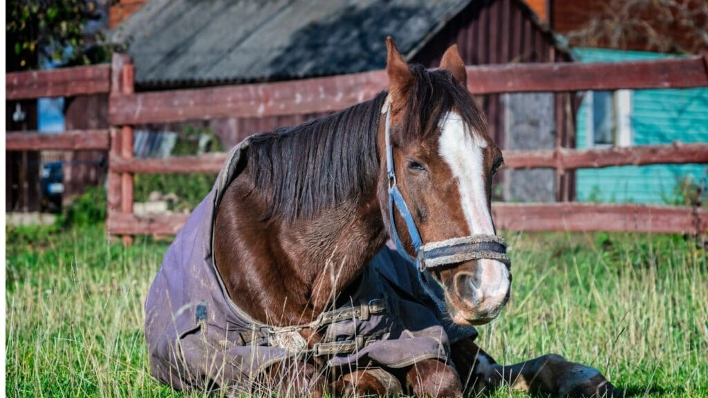 Picture of an old racehorse sitting on the ground.