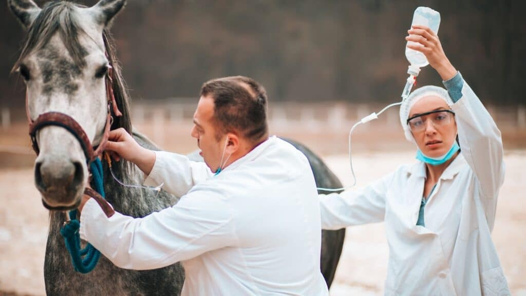 Picture of a vet administering an IV to a horse.