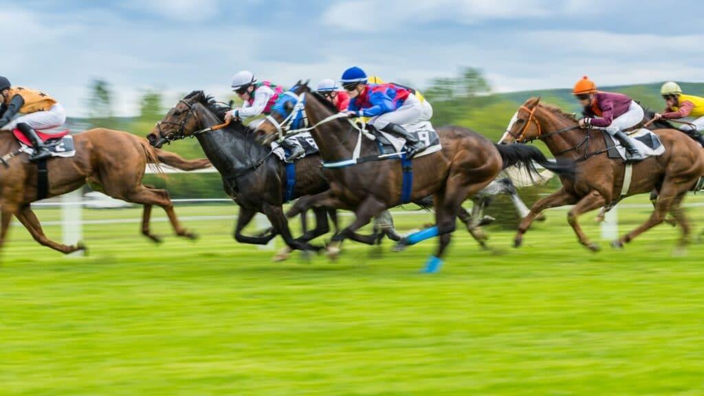 grass,horse racing,turf,