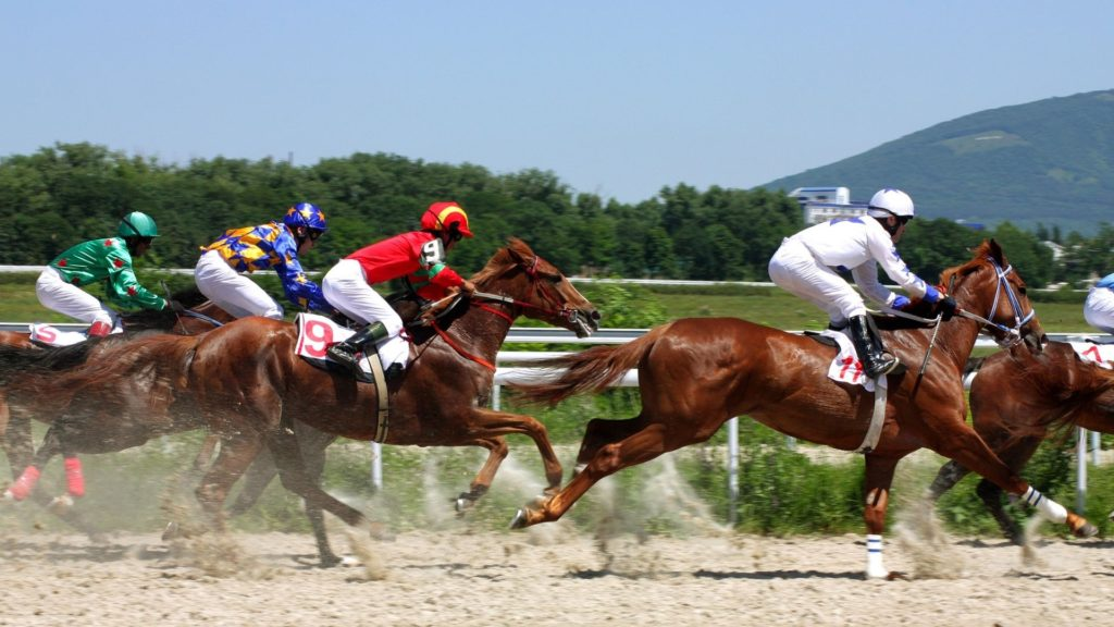 Picture of horses racing in a handicap,race,