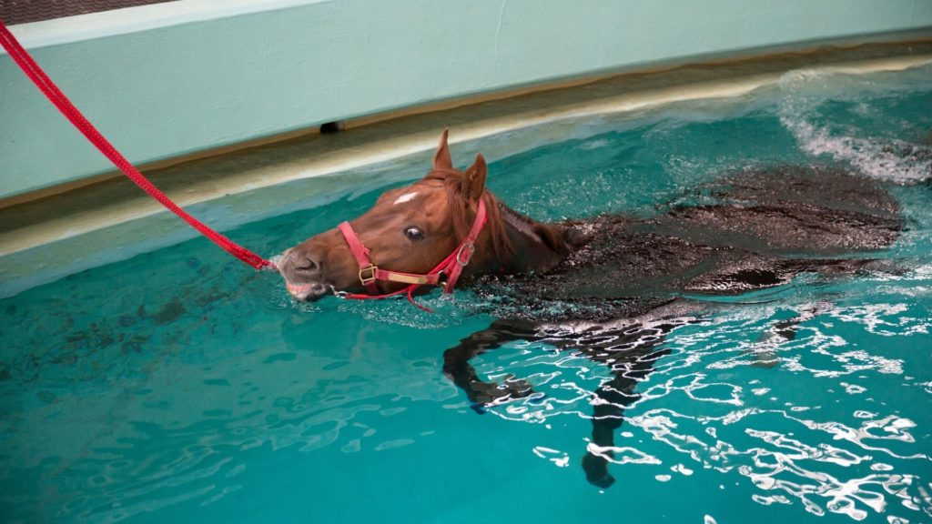 Picture of a horse in aqua therapy,