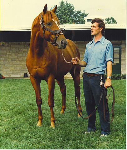 Picture of the great racehorse Affirmed