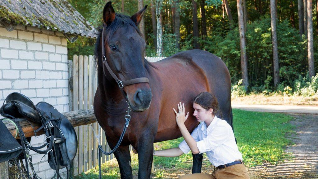 stumble,trip,horse,