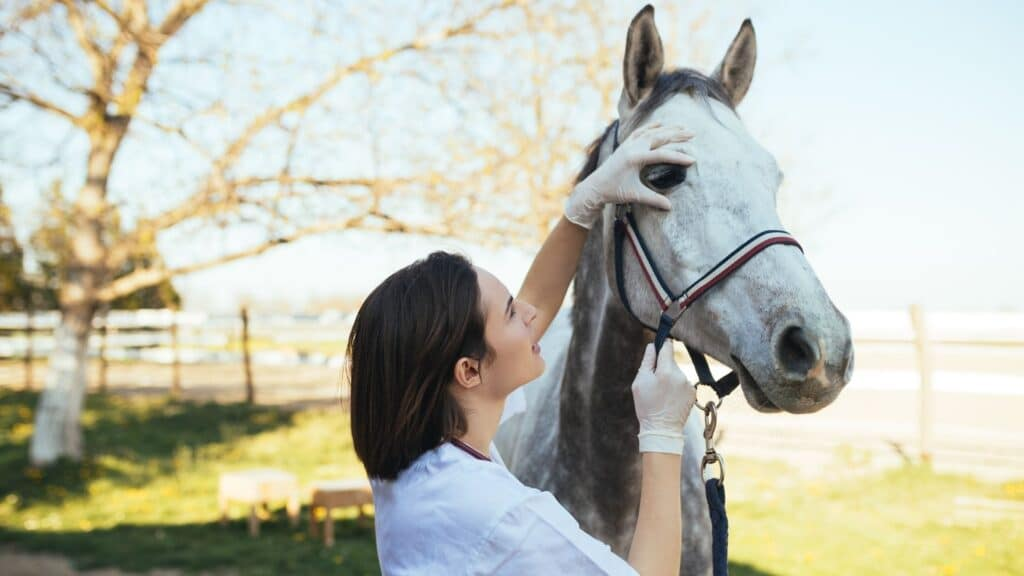 worming,horse,parasites,