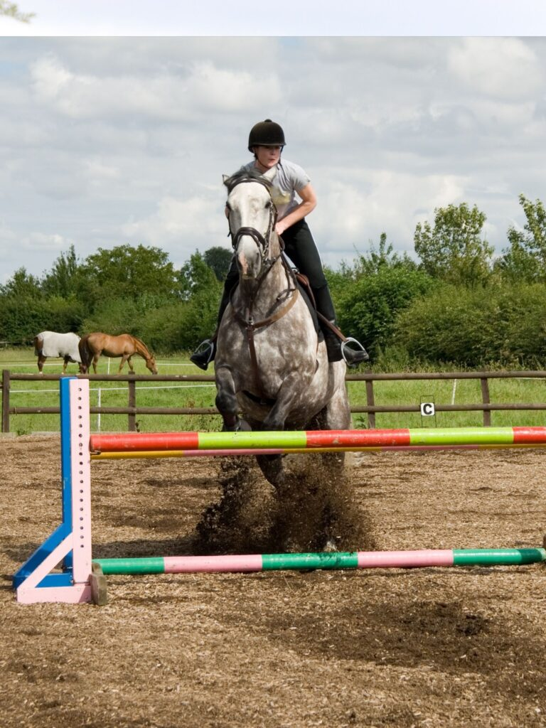 Picture of an Irish Sport Horse