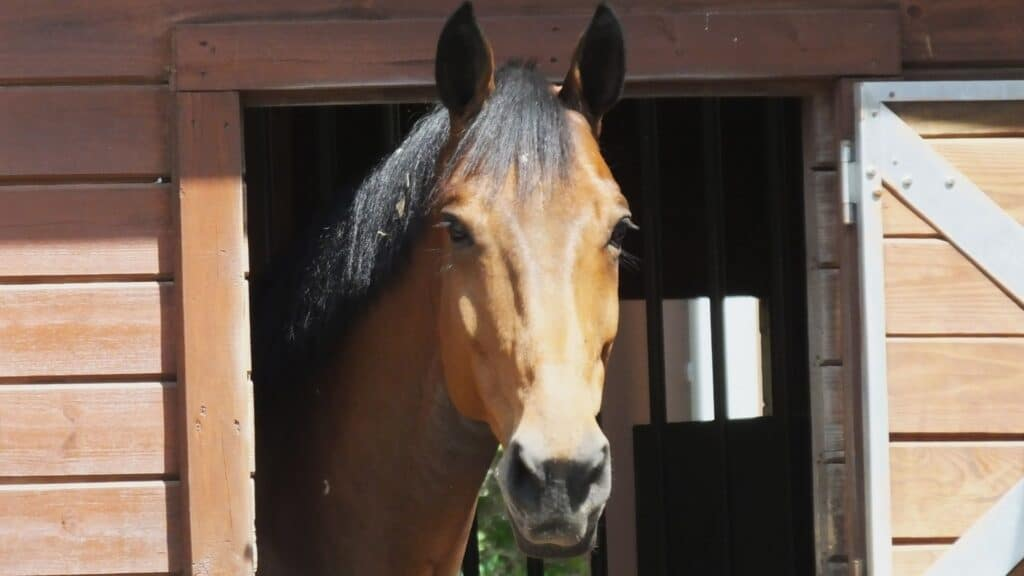 picture of a horse sticking his head out of a barn,