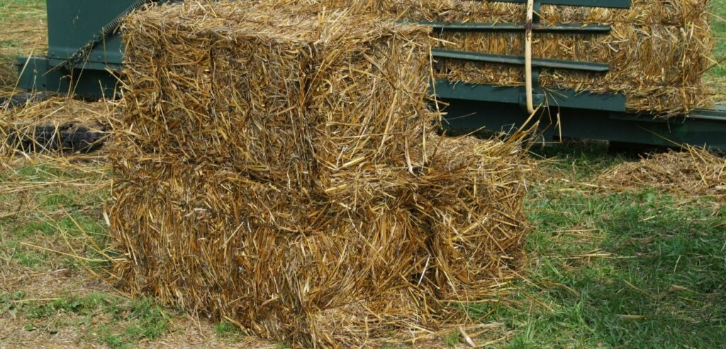 picture of bales of straw to use for bedding in horse stalls,