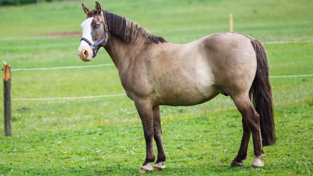 Picture of a blue-eyed horse.