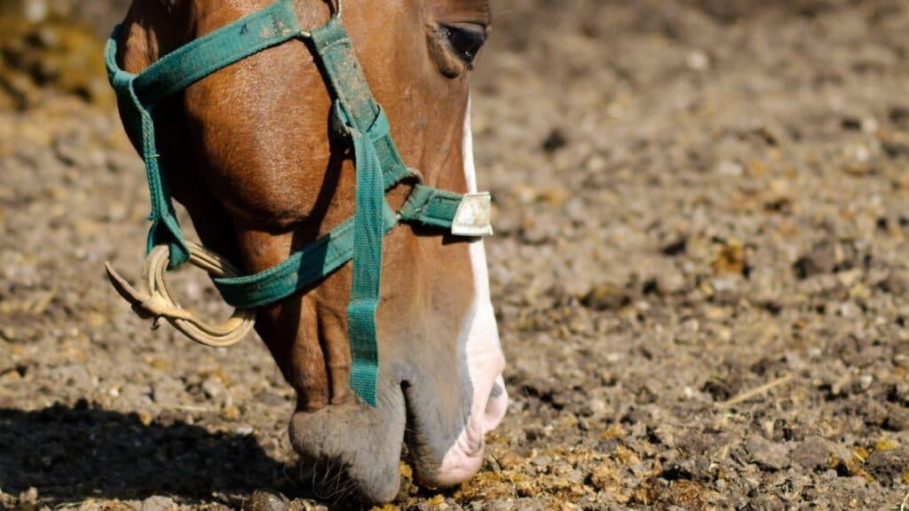 eat dirt,horses,
