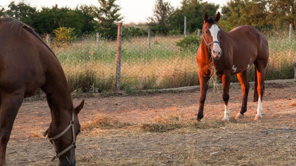 eat dirt,horse,