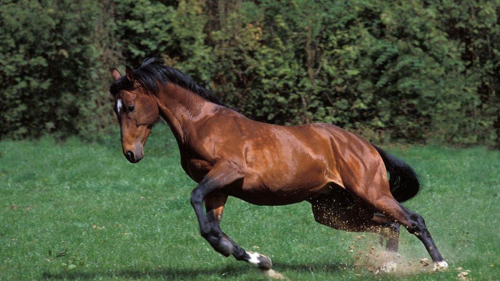 horseflies,