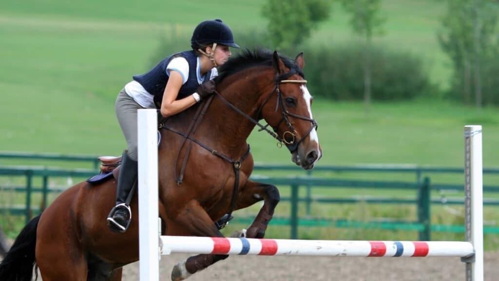 quarter horses,