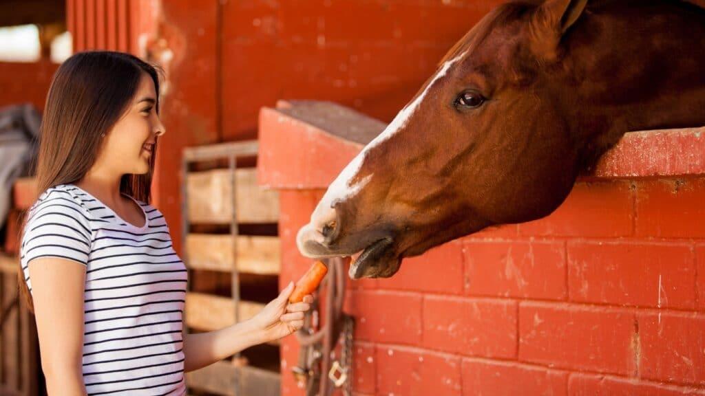 smart,horses,