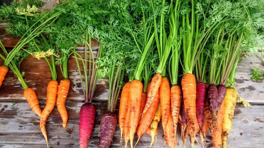 horses like to eat,carrots,