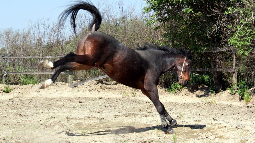 horses kick,horses,kick,