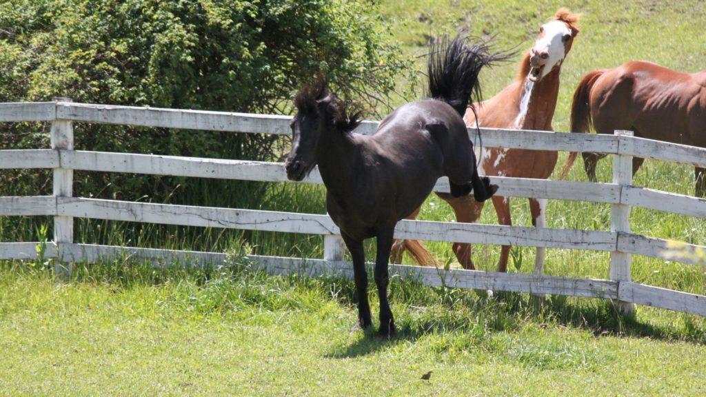 horses kick,kick,horse,