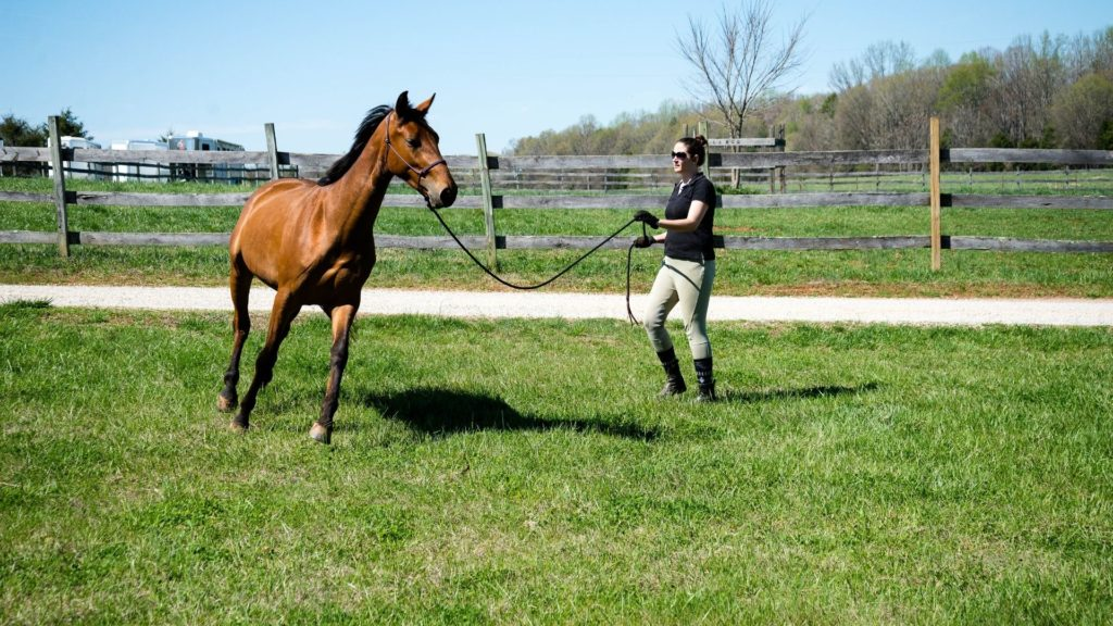 ride, lunging a horse, young horse,